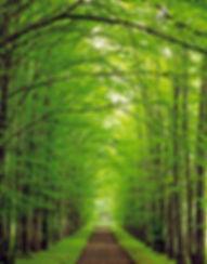 path through trees.JPG