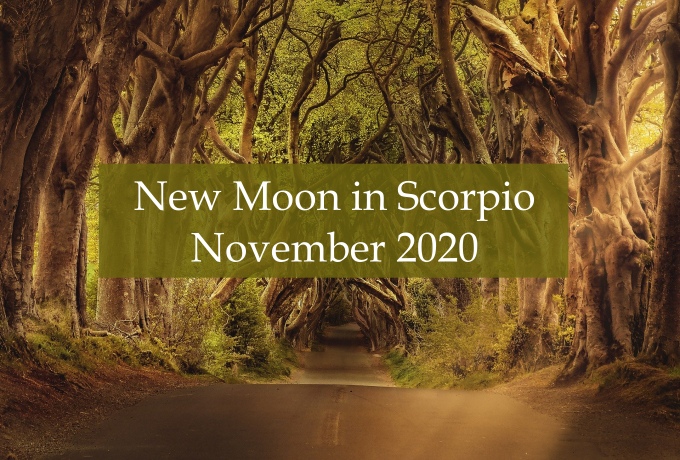 New Moon in Scorpio - Abby Drew - Intuitive Guide