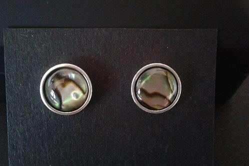 Paua Shell Stud Earrings