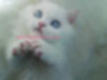 Truvy standard female blue eyes Olaf 3 P