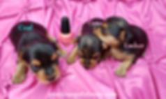 Sasha 3 pups 3 Coal Ember Camo.png