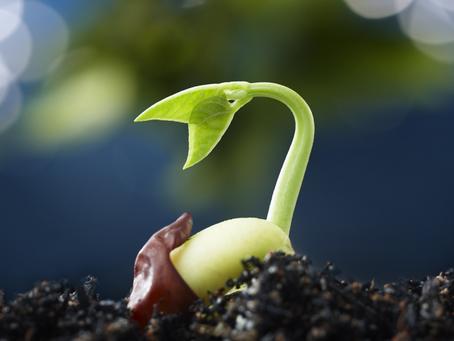 """The Kingdom OF God Is Like A Mustard Seed"", said Jesus."