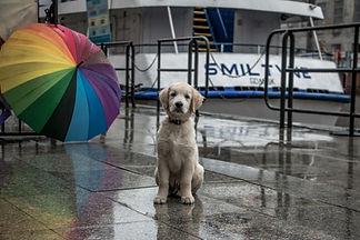 Hund fotad på gatan i Gdansk.