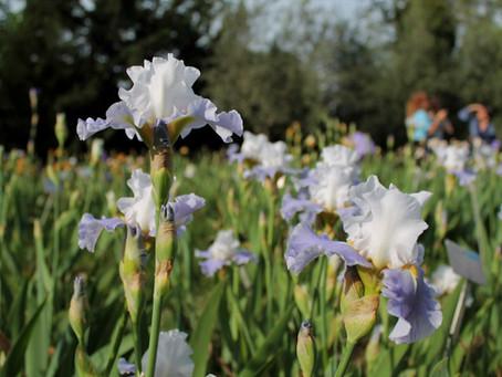 Un concorso internazionale al Giardino dell'Iris di Firenze