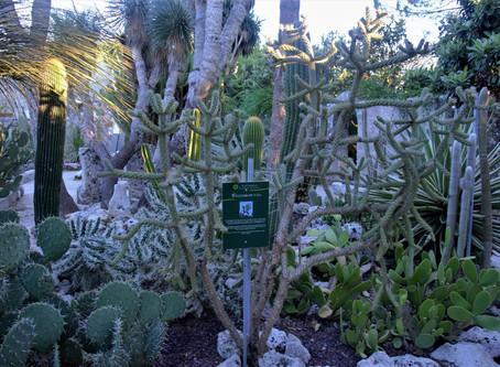Tesori di Puglia: l'Orto botanico La Cutura