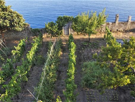 L'antico orto monastico di Monterosso