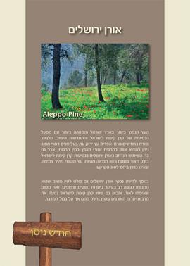 KKLdiary 2015-Trees-B-for print-7.jpg