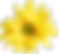 Flowers-Yellow-03.png
