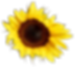 Flowers-Yellow-05.png