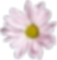 Flowers-Pink-04.png