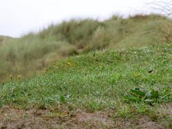 Abbey Island Grass