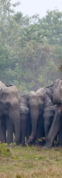 Rhino elephant stand off