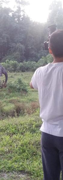 Following an elephant family