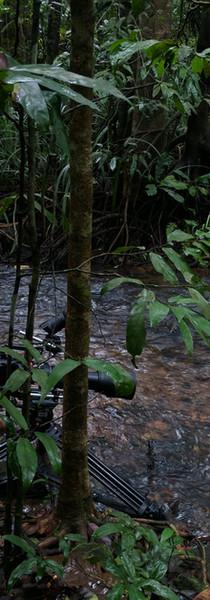 Wild Karnataka - Foot flagging frogs