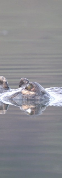 Gorgeous crocs