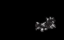 Ciara%20Duggan%20Logo%20(5)_edited.png