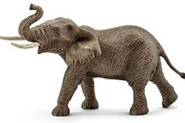 African Male Elephant