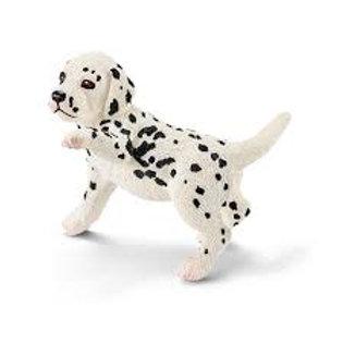 Dalamatian Puppy