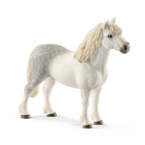 Welsh Pony Stallion