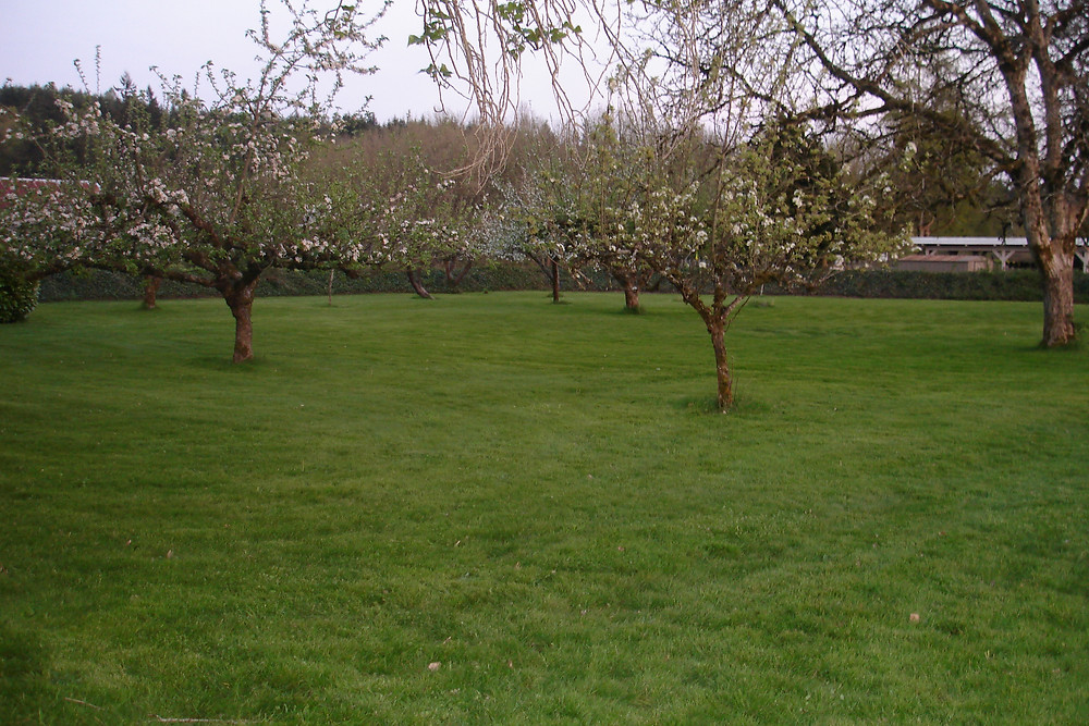 Seedpod Farm Orchard