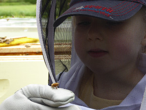 The Lightness of Bee-ing