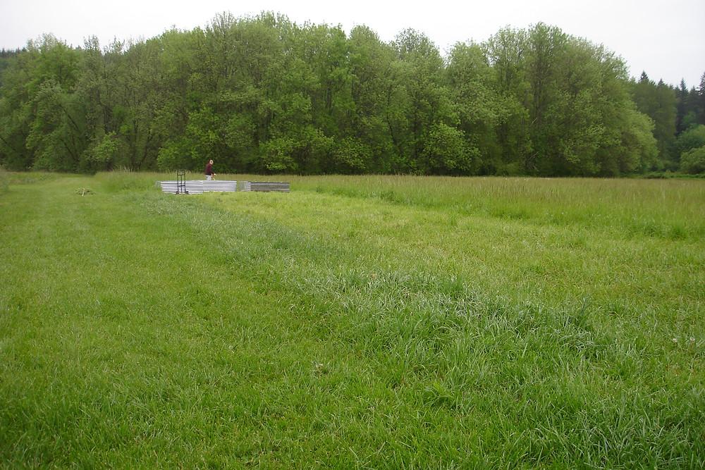 Seedpod Farm Pasture