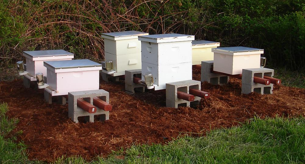Seedpod Farm Honey Bees_edited