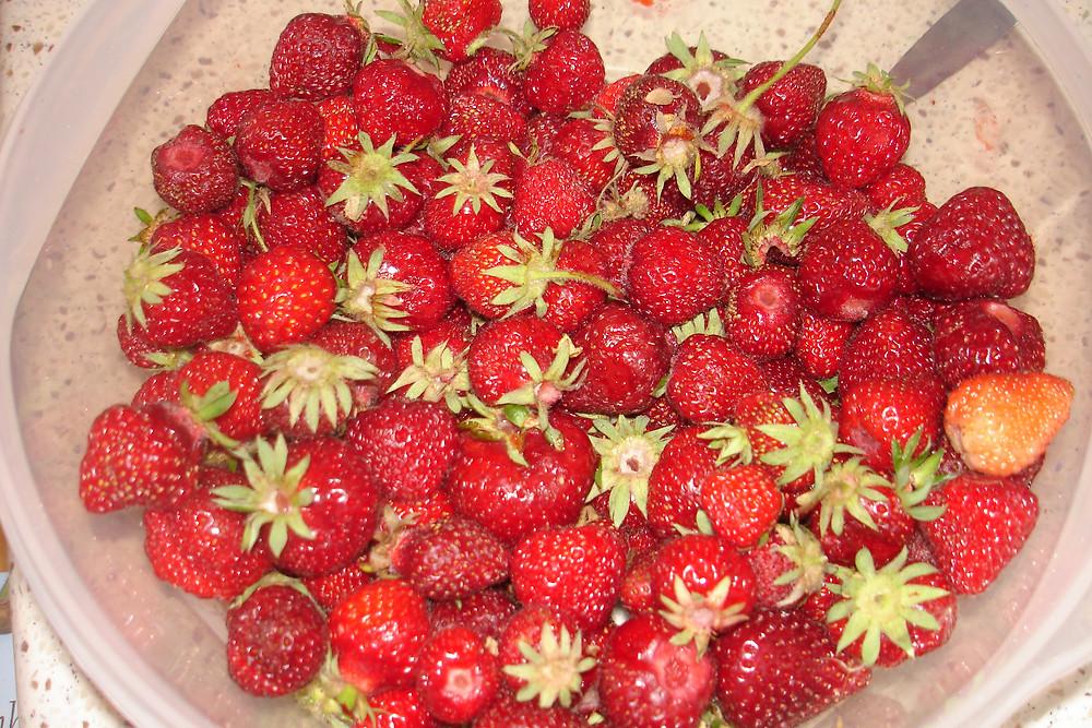 Seedpod Farm Strawberries