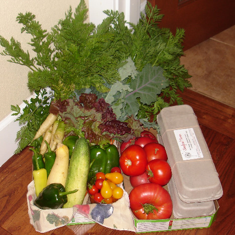 Seedpod Farm CSA Share