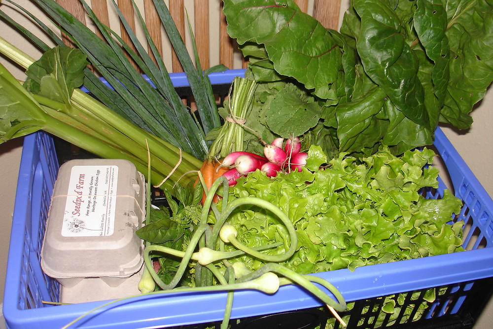 Seedpod Farm Summer CSA Share