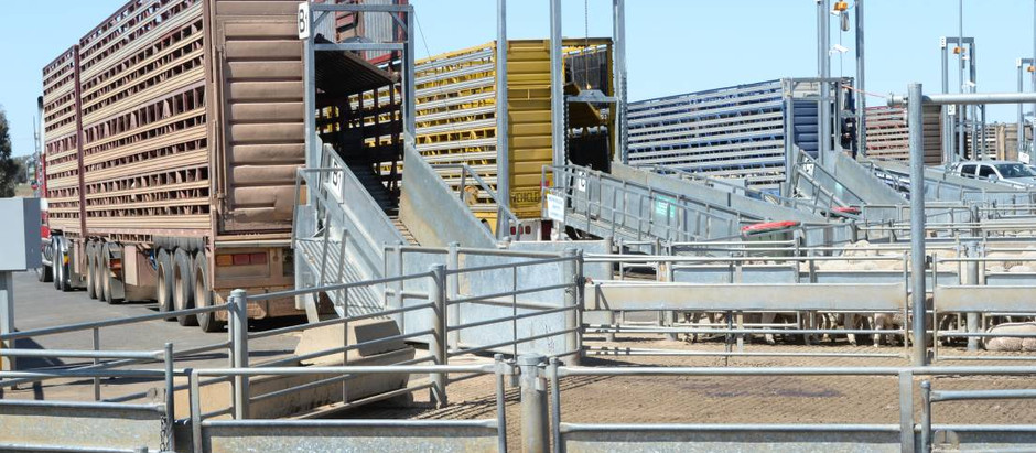 Saleyards instructed to install Weighbridges to comply...