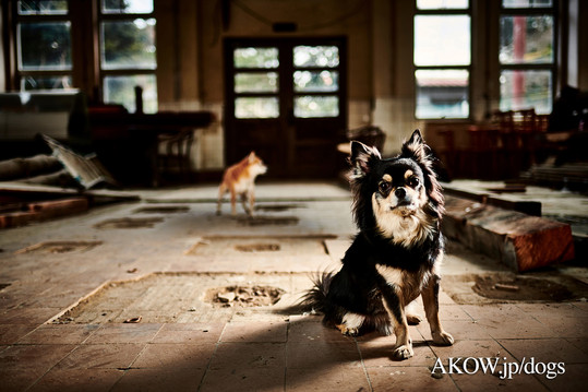 AKOW Dogs Photography