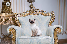 boss kitty.jpg