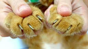 Trim my cat's nails?? ARE YOU CRAZY?!