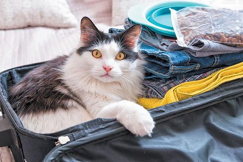 cat-in-a-suitcase.jpg