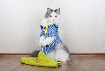 CatCleaning.jpg