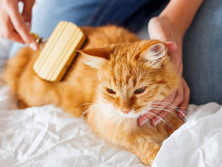 A how-to on EFFECTIVELY and CORRECTLY brush your cat