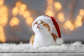 christmas-cat2.jpg