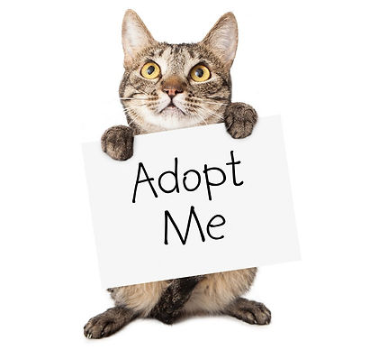 cat-adoption.jpg