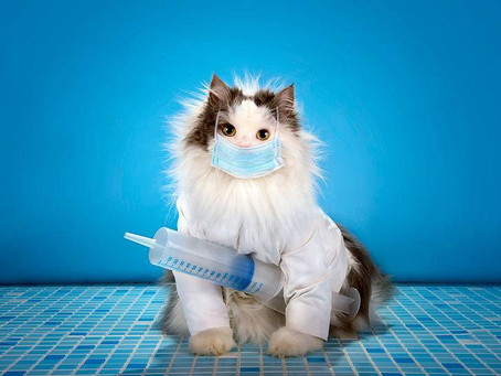 Vaccines my CAT needs in order to board in a cat hotel.