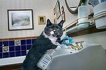 catbathroom.jpg