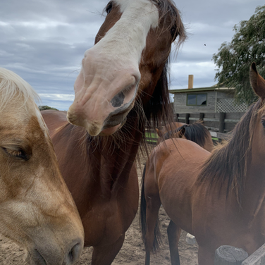 Horses at The Ranch.HEIC