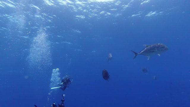 慶良間でロウニンとサメ