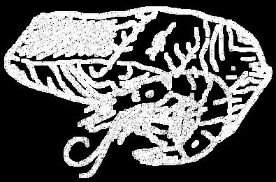 Lachs+schrimps.png