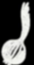 Eine Zwiebel gezeichnet