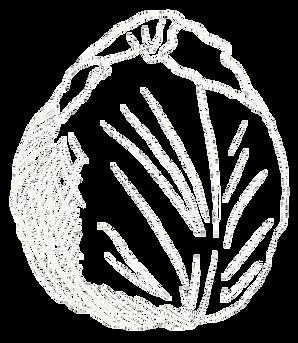 Rotkohl Rotkraut gezeichnet