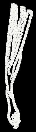 Fruhlingszwiebel gezeichnet