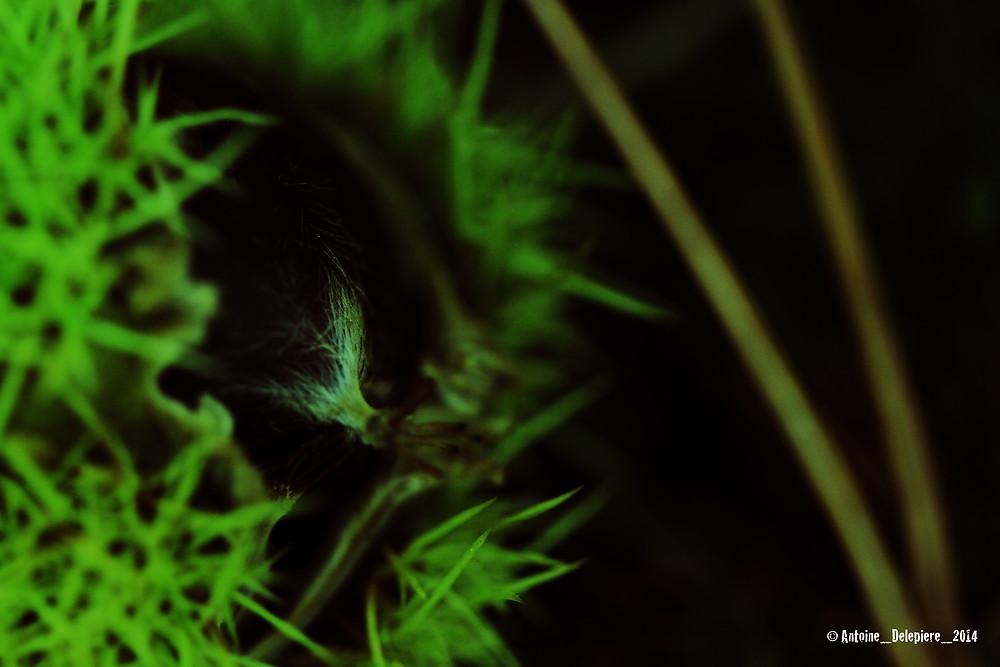 ©_Antoine_Delepiere_2014_blog092014_15.jpg