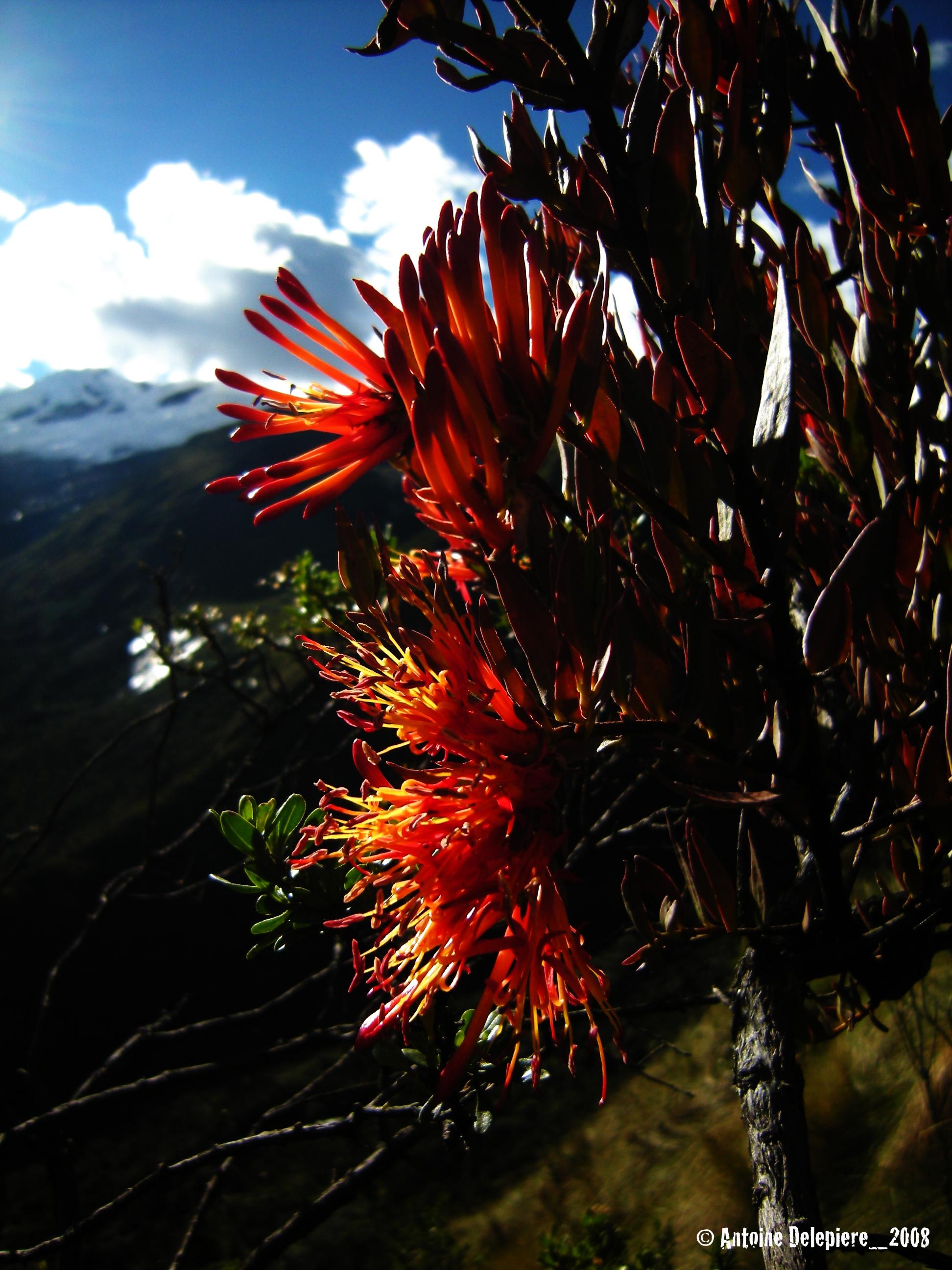 ©_toine_2008_Peru_Huaraz