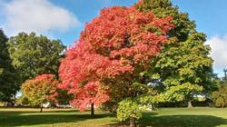 2020-09 fall tree